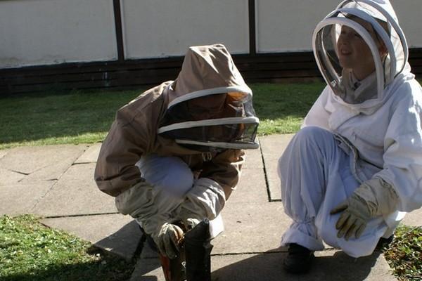 beekeeping600